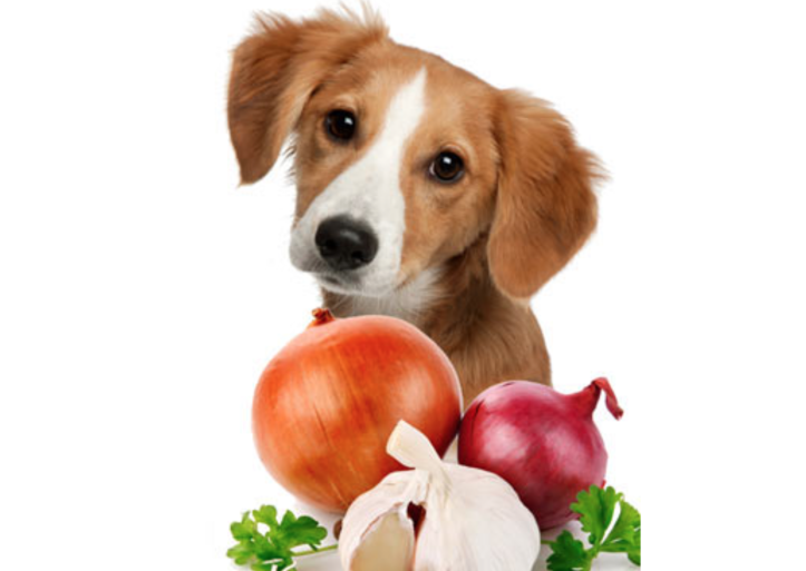 risks-dogs-eating-onions